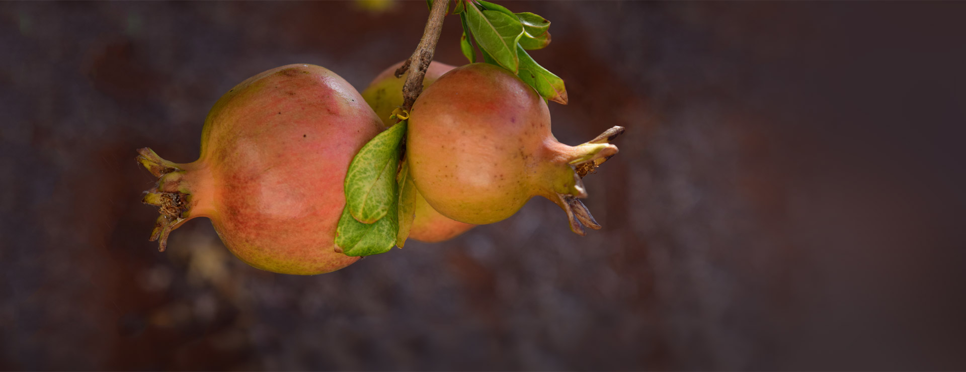 granatapfel_home_header4_1920x7403